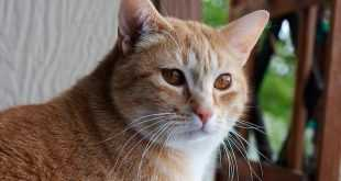 TOP Daftar 40 Nama Kucing Laki-Laki dan Perempuan